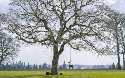 ISA Certified Arborists In Portland & SW Washington