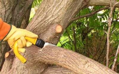 Winter Is Great Time For Pruning Trees In Portland