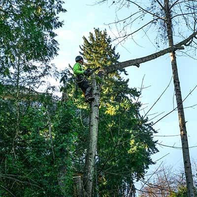 General tree Gallery image