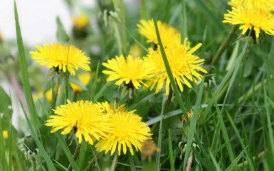Start Thinking About Weed Control For Portland Yards Now