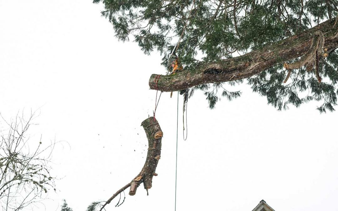 General Tree Service blog page