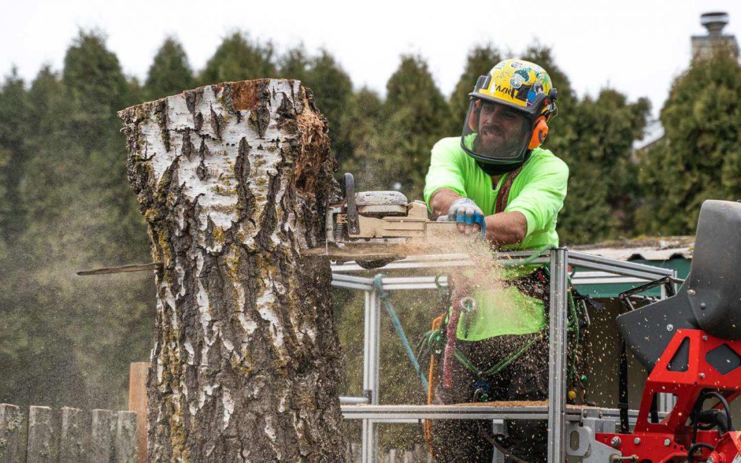 General tree Arboriculture Career