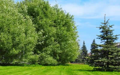 Tree Preservation Grant Helps Save Trees In Portland And Vancouver