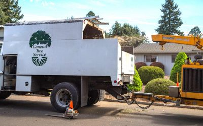 Tree-ific Arbor Care Is Now A Branch Of General Tree Service