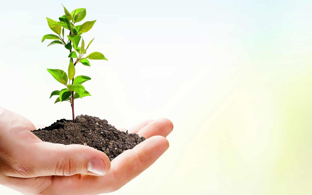 General Tree Service Invest In The Environment