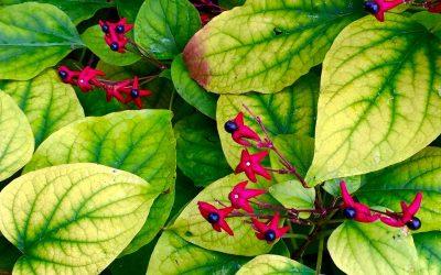 Plant Health Care Basics For Portland Oregon Homeowners