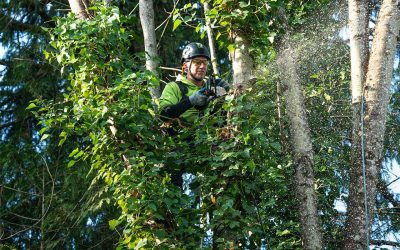 Why Portland homeowners should choose an accredited tree care company