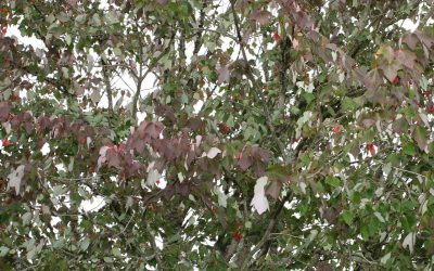 Drought Effects On Portland Trees And Plants