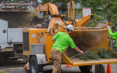 General Tree Service Acquires Peacock Tree Preservation