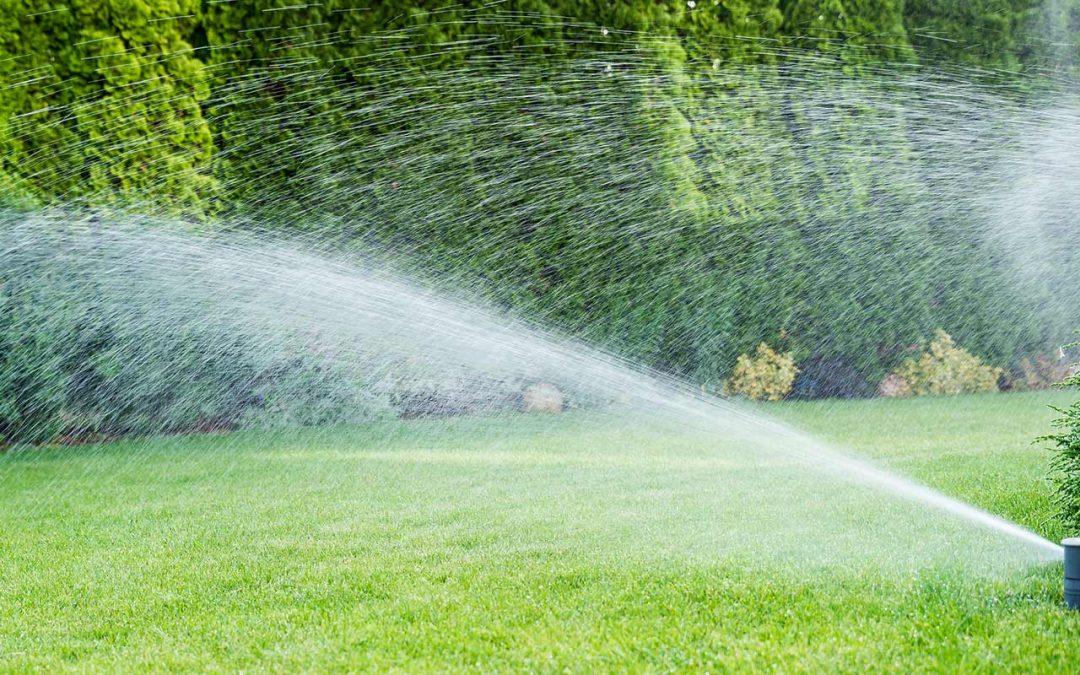 General tree Expert Watering Tips