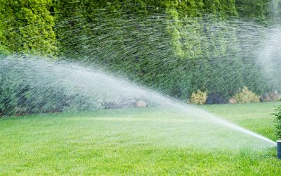 Expert Watering Tips For Portland Oregon