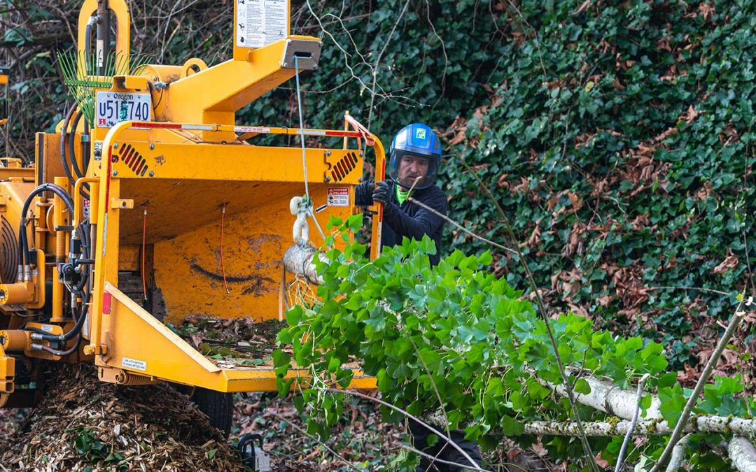 General tree What You Need To Know About Portland Chip Drop