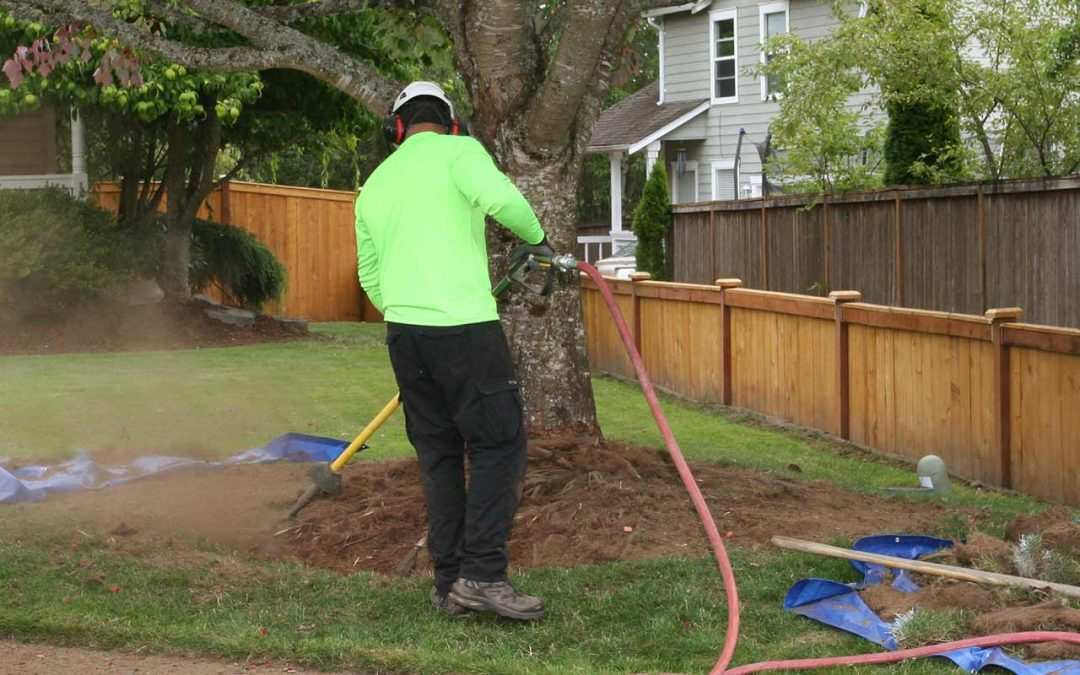 General Tree Service Ailing Tree