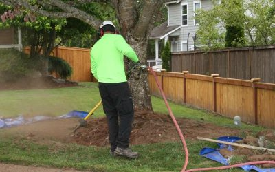 Ailing Tree In Your Portland Yard? Try Our Root Zone Enhancement Treatment