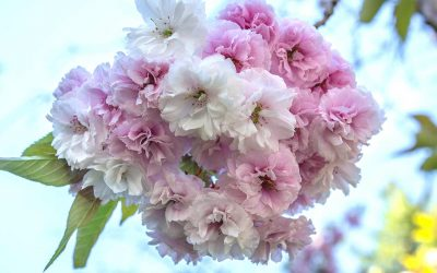 Pruning Keeps Trees In Your Portland Yard Healthy