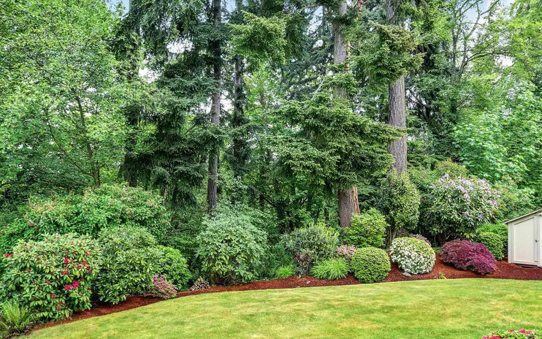 General Tree Service Oregon landscapes