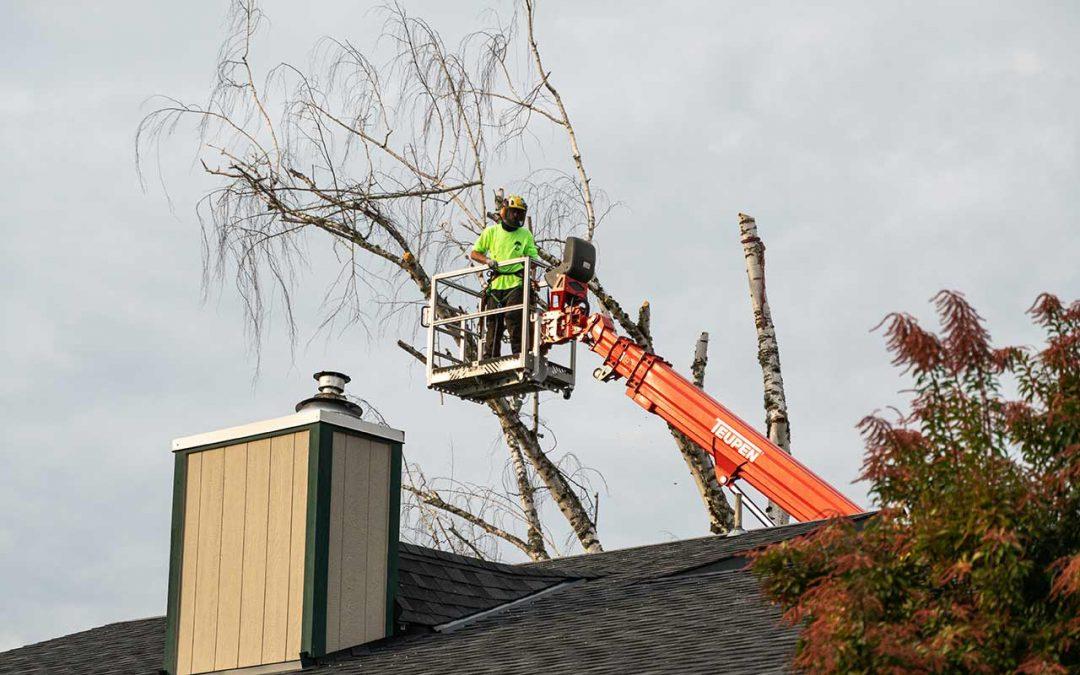 General Tree Service Prevent Storm Damage