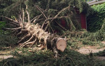 How To Prevent Storm Damage To Your Portland Home Pt.3