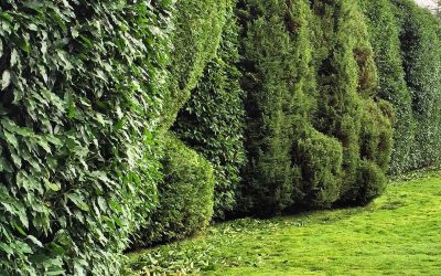 Why You Need To Fertilize Trees and Shrubs in your Portland Yard