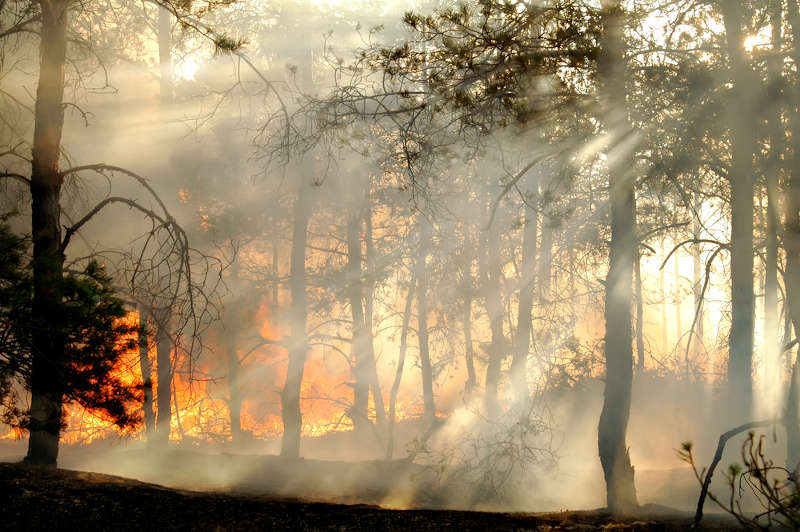 fire-mitigation-tree-service-importance